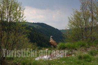 turizam-serbia-4.jpg